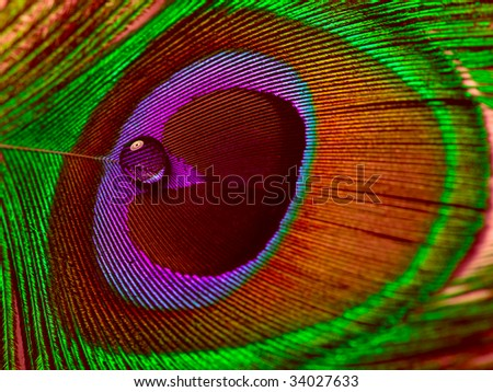 feathers of peacocks as eye - stock photo