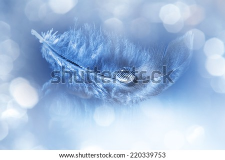 feathers with drop - purity - stock photo