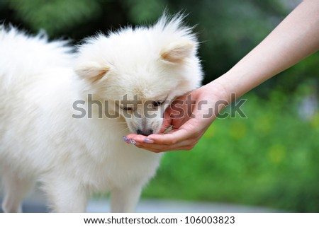 feed the dog - stock photo