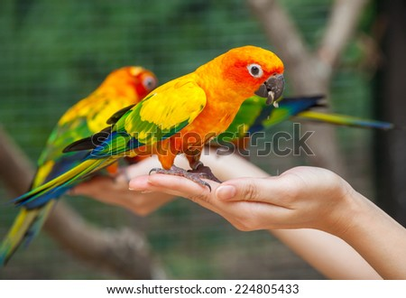 Feeding Colorful parrots sitting on human hand - stock photo