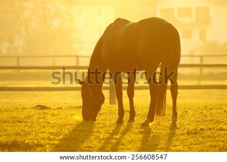 feeding horse in autumn - stock photo