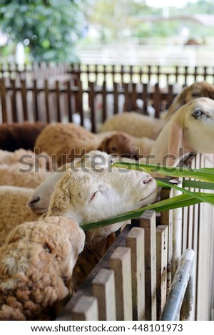 Feeding sheep with green grass in farm, selective focus - stock photo
