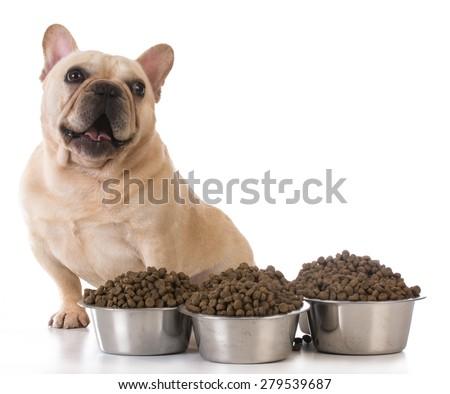 feeding the dog - french bulldog sitting beside several bowls of dog food on white background - stock photo
