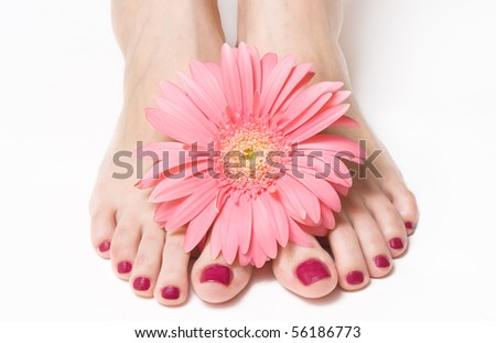 Feet with pink manicure and gerbera - stock photo