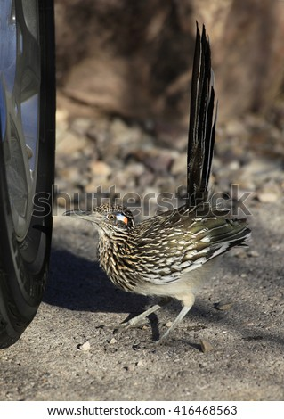 Feisty Roadrunner Is Ready to Fight the Competition Reflected in the Chrome Wheel - stock photo