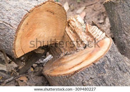 felled timber,cut tree in the forest - stock photo