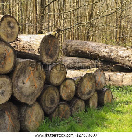 Felled tree logs in a forest stacked next to a pathway marked X - stock photo
