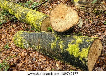 Felled trunks in the forest - stock photo