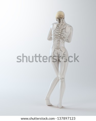 Female anatomy - health and science illustration - stock photo
