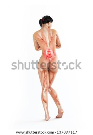 Female anatomy illustration - lower back ache - stock photo