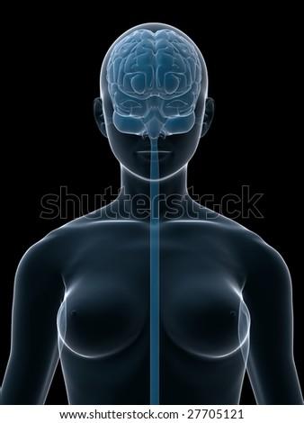 female brain - stock photo