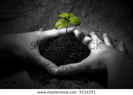 Female careful hands gathering round a green plant. Environmental conceptual image. Focus on a plant. - stock photo