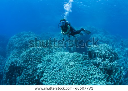 Female diver hovering over huge corals in the Red Sea, Egypt - stock photo
