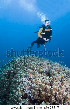 Female diver swimming over a large coral in the Red Sea, Egypt - stock photo
