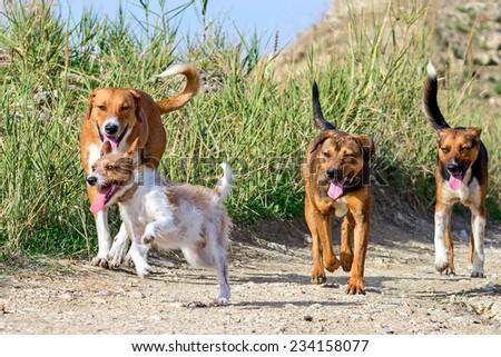 how to train a dog who runs away