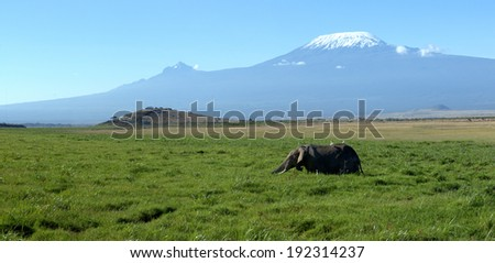 Female elephant with Mount Kilimanjaro in the background - stock photo