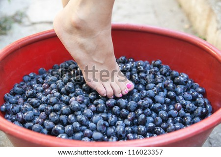 Female feet crushing ripe grapes in a bucket to make wine after harvesting grapes - stock photo