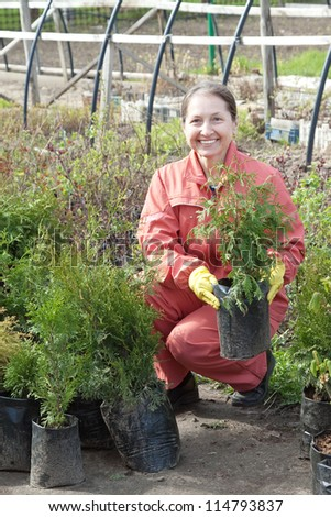 Female gardener chooses thuja sprouts at market - stock photo