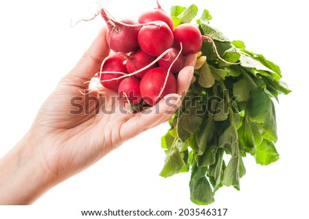 Female hand holding a bunch of fresh red radishes on white background. - stock photo