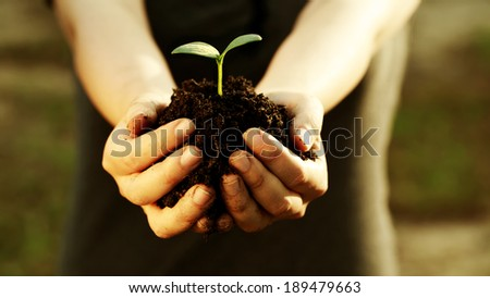 Female hand holding a young plant with soil - stock photo
