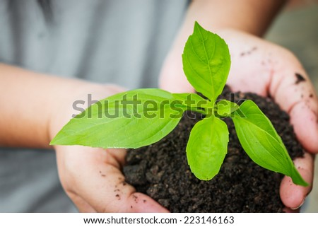 female hand holding plant  - stock photo