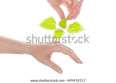 Female hand holding stinging nettle and touching her hand. Natural arthritis medicine. - stock photo