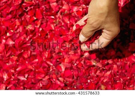 Female hand retrieve red flower petals - stock photo