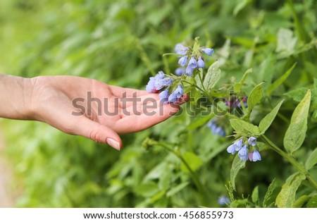 Female hand touching flower bell. Macro. Background - stock photo