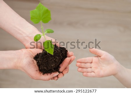 Female hands giving a green sprout in child's palm, neutral background - stock photo