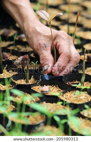 female hands hold a young seedling - stock photo
