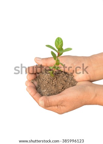 Female hands holding coins and small plant - stock photo