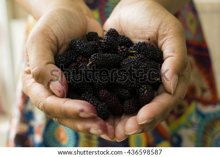 Female hands holding tasty ripe mulberries, Note: Shallow depth of field - stock photo