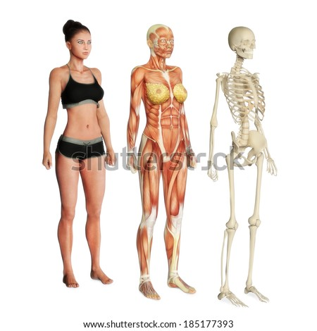 Female illustration of skin, muscle and skeletal systems isolated on a white background. Male version also available. - stock photo