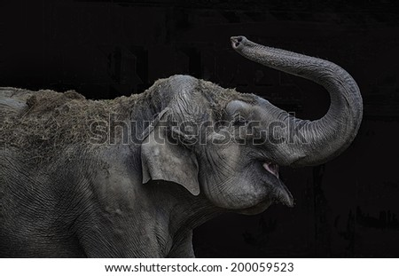 Female indian elephant playing with its trunk - stock photo