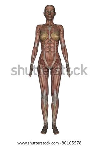 female lay figure - stock photo