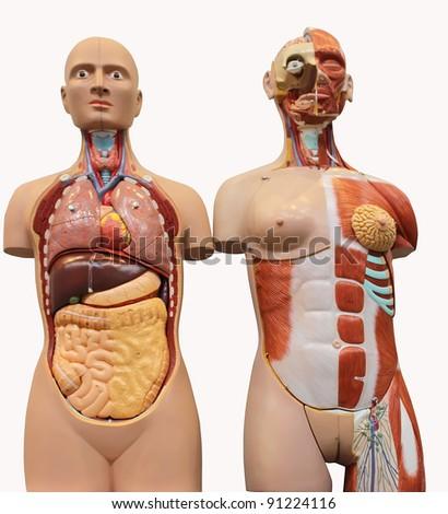 Female medicine model - stock photo