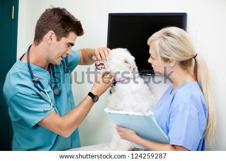 Female nurse with young veterinarian doctor examining a dog at clinic - stock photo