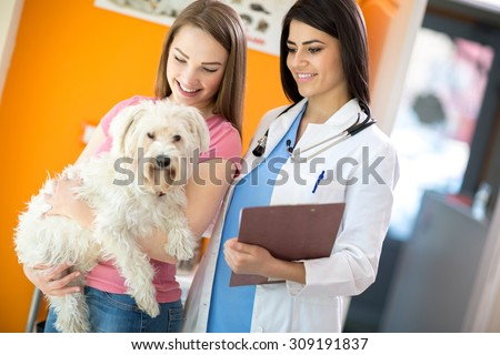 Female owner with her beautiful Maltese dog and veterinarian at vet ambulant - stock photo