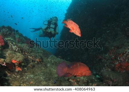 Female scuba diver and fish - stock photo