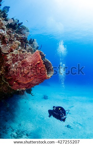 Female SCUBA diver and sponge - stock photo