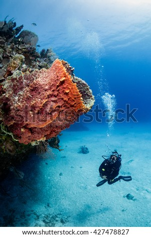 Female SCUBA diver and Sponge on a tropical coral reef - stock photo