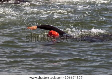 Female sea crawler - stock photo