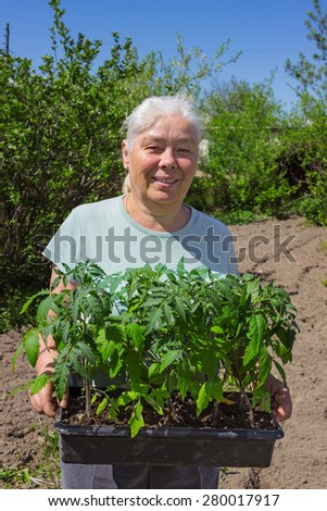 Female senior gardener posing seedlings tomato in springtime - stock photo