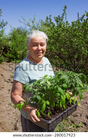 Female senior gardener posing seedlings tomato spring time - stock photo