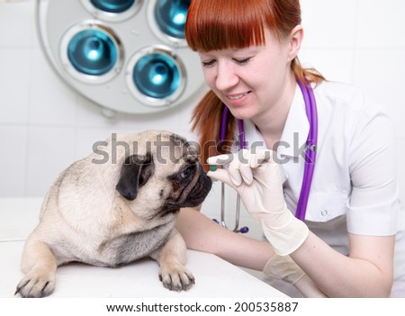 Female vet giving a pill to a obedient dog. - stock photo