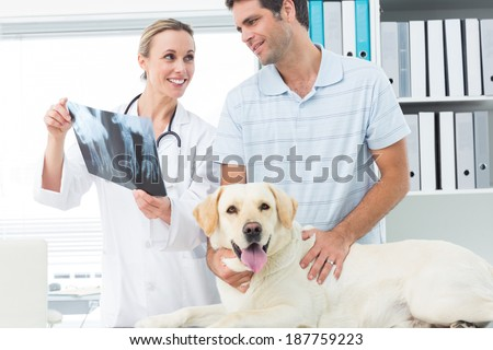Female veterinarian and pet owner discussing Xray of dog in clinic - stock photo