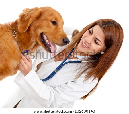 Female veterinarian checking a dog - isolate dover a white background - stock photo