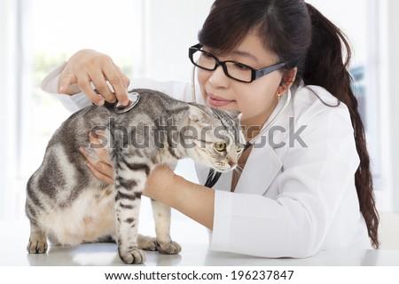 Female  Veterinarian examining a cute cat at clinic - stock photo