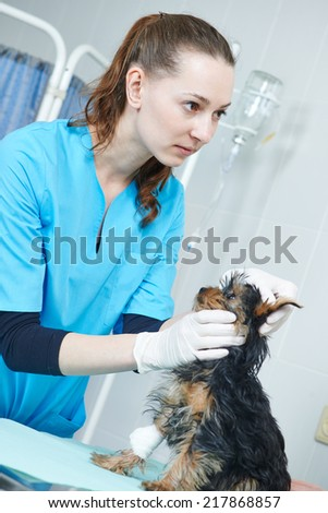 Female veterinarian surgeon worker examining dog in veterinary surgery clinic - stock photo