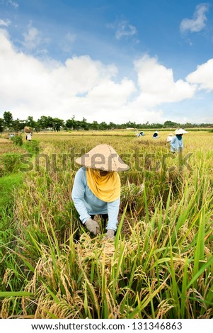 Female workers harvesting rice. Bali, Indonesia - stock photo